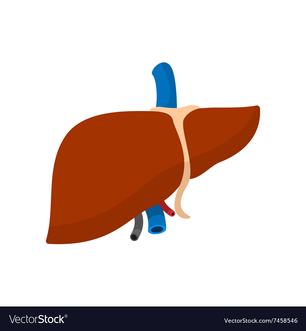 Liver (Anatomy): Picture, Function, Conditions, Tests ...