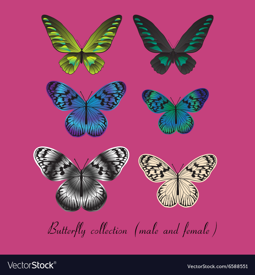 Collection with colorful butterfly