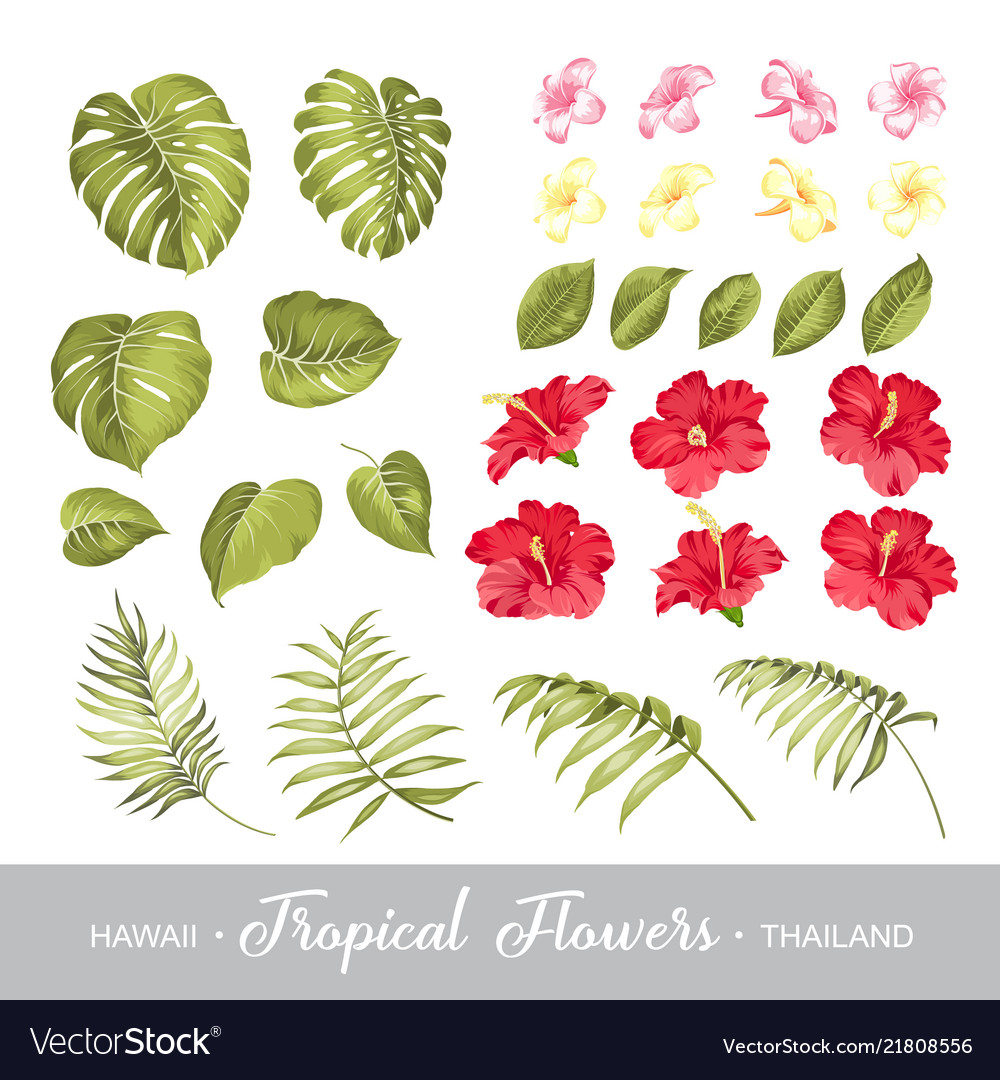 Set of tropical flowers elements collection of