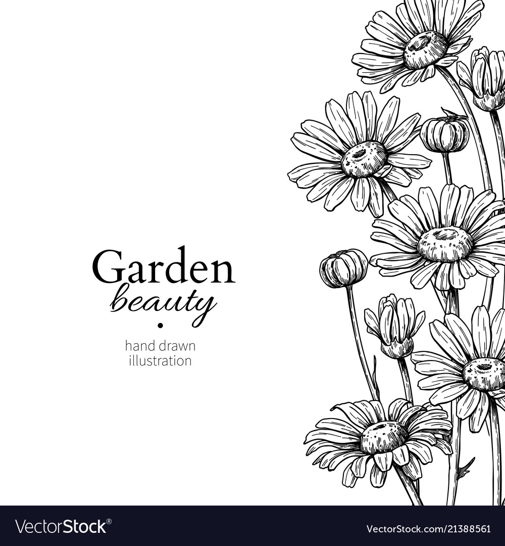 Daisy Flower Border Drawing Hand Drawn Royalty Free Vector