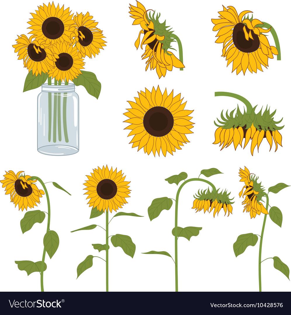 Sunflowers Set vector image