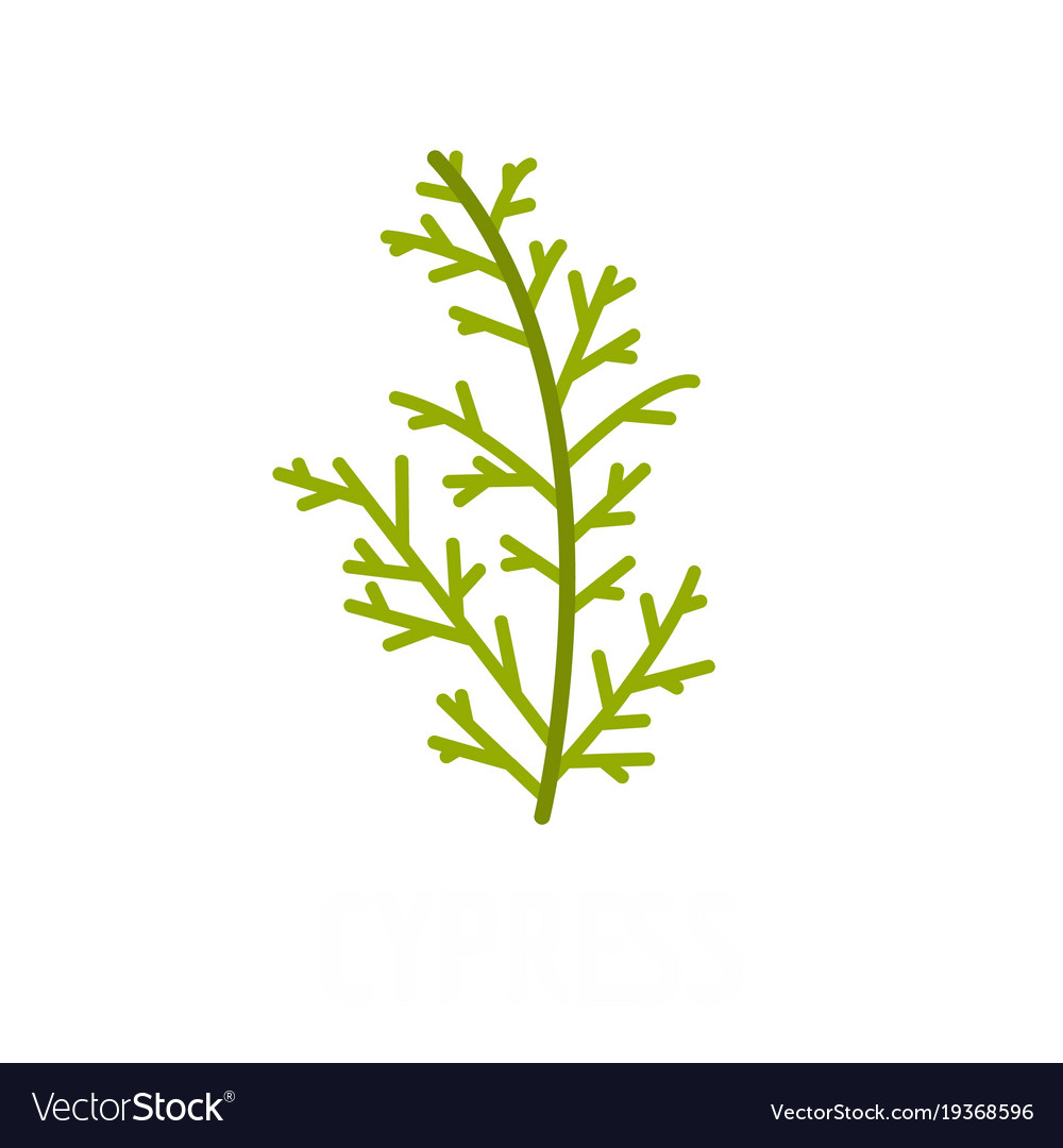 Cypress leaf icon flat style vector image