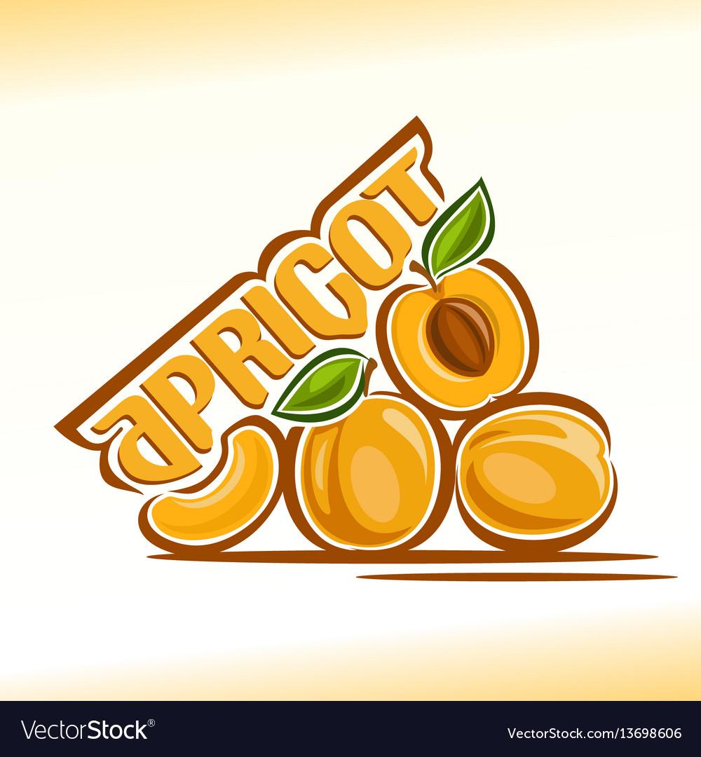 Apricot still life vector image