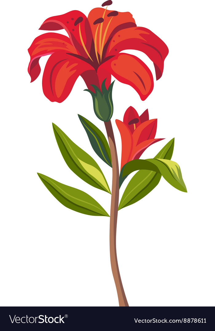 Tiger Lily Hand Drawn Realistic