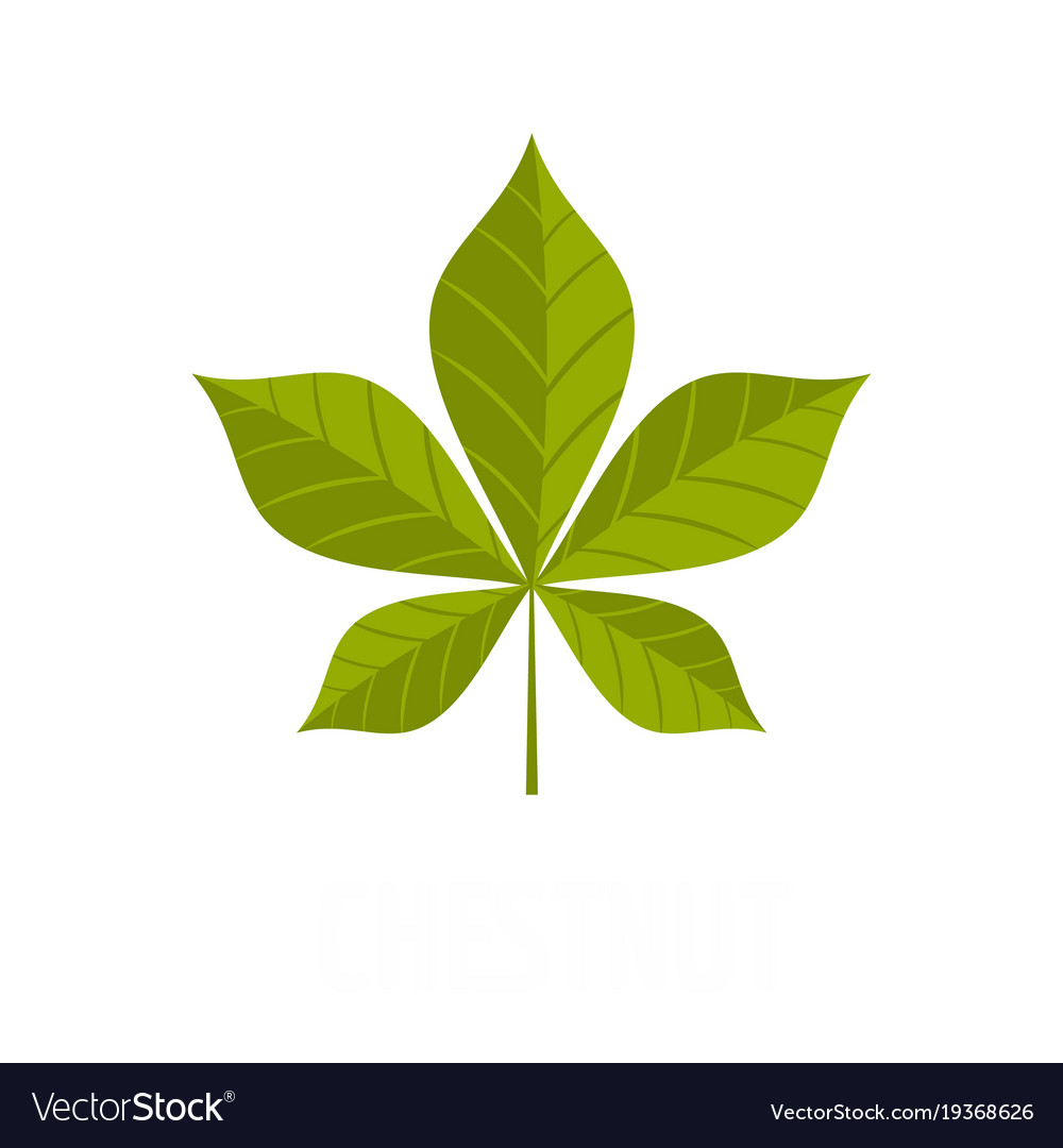 chestnut leaf icon flat style royalty free vector image