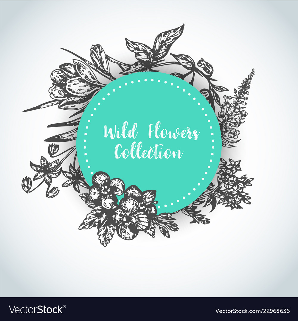 Herbs and wild flowers background vintage
