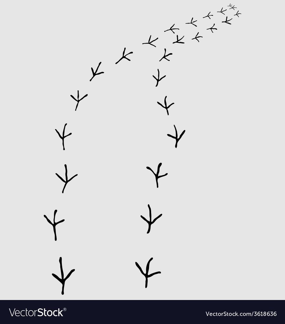 Птичьи следы картинки для детей
