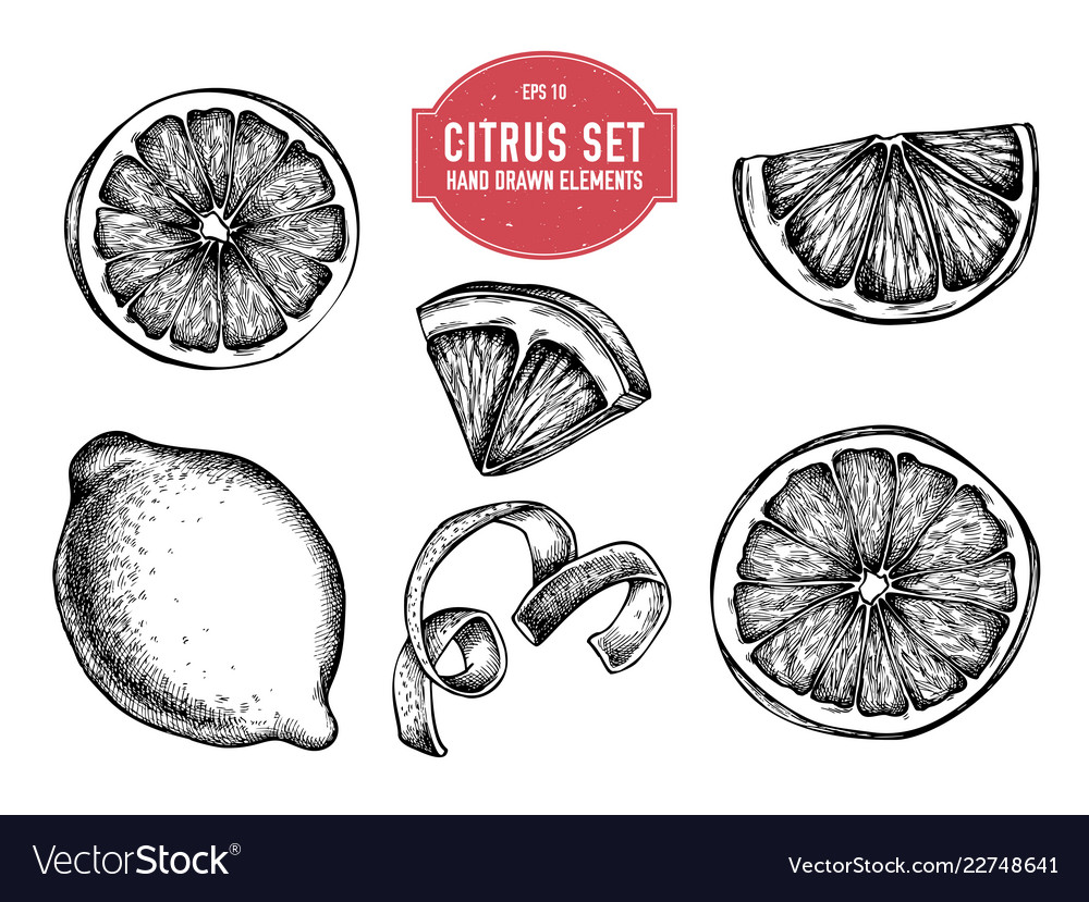 Collection of hand drawn citrus