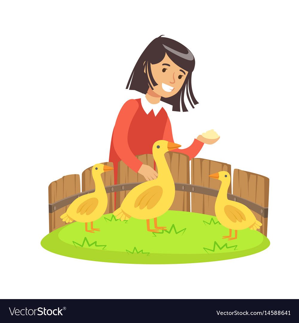 Cute little girl feeding ducks with grain in a