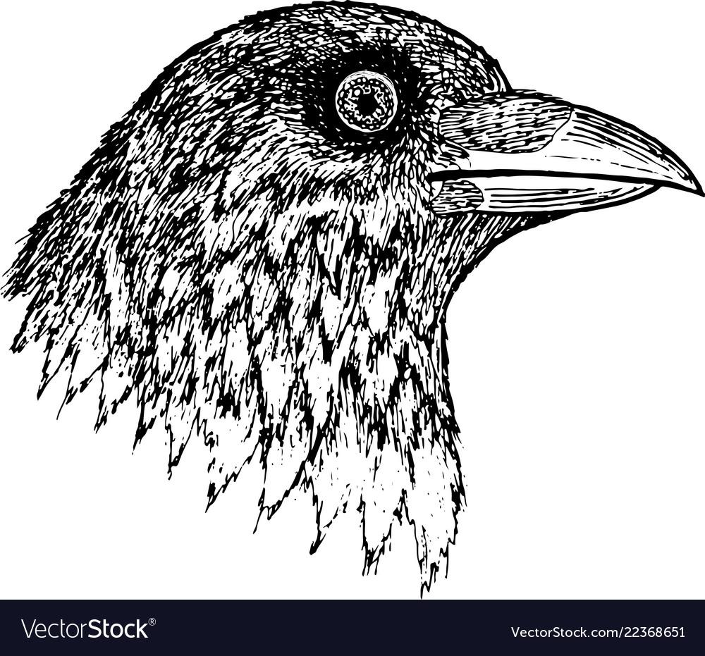 Crow - ink graphic artwork