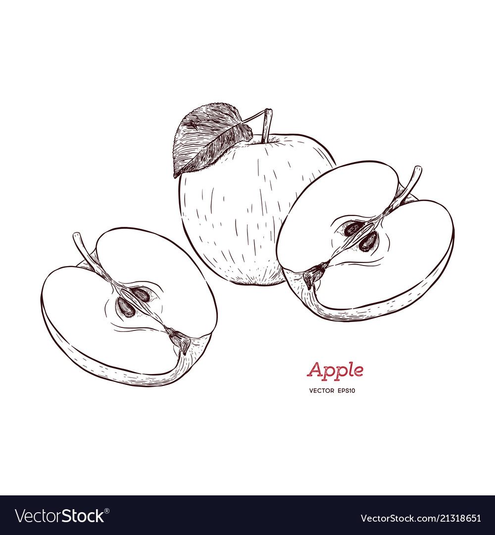 Fresh apple hand drawn sketch style eco food