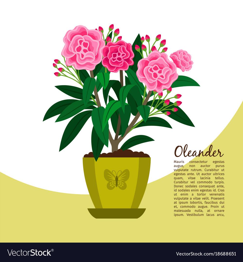 Oleander Plant In Pot Banner Royalty Free Vector Image