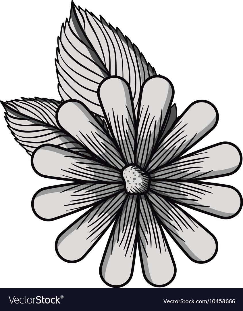 Beautiful Flower Drawing Isolated Royalty Free Vector Image