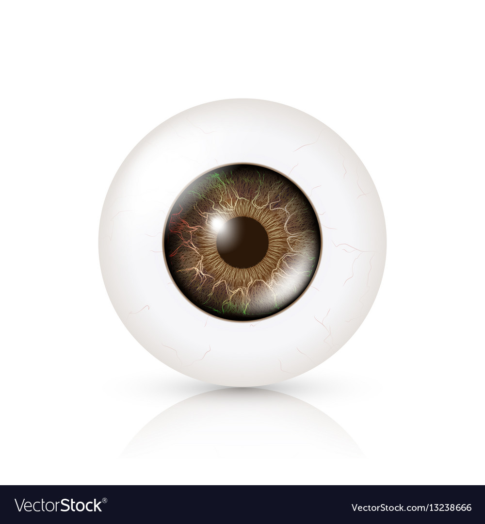 Photo realistic eyeball human retina