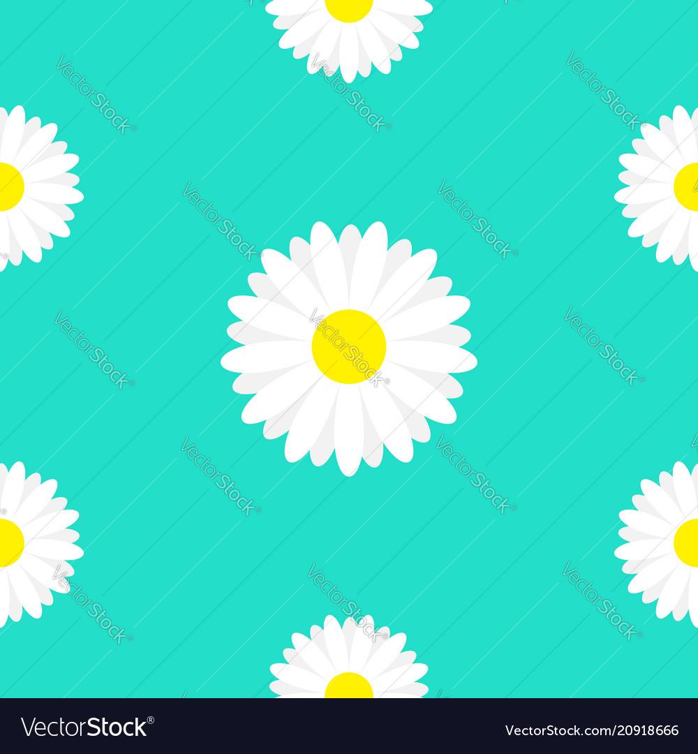 White daisy marguerite chamomile icon cute flower vector image