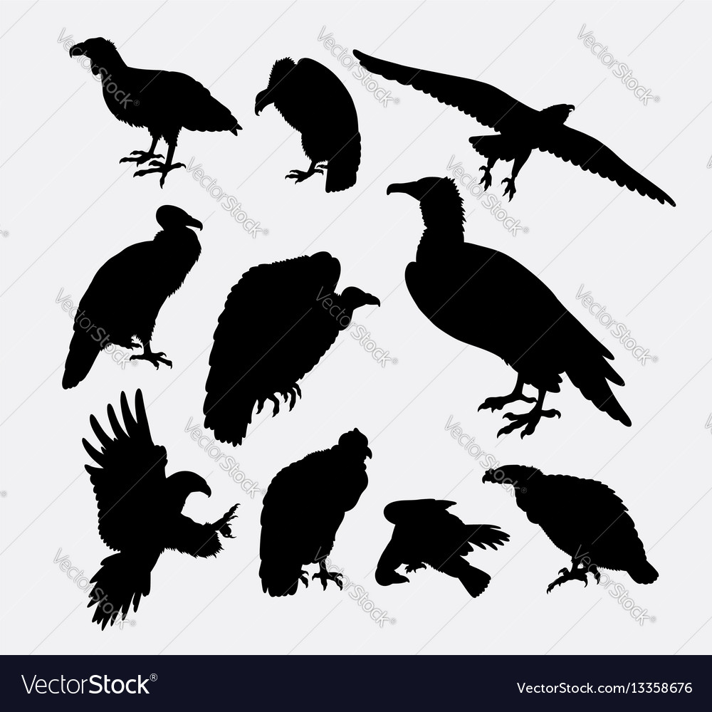 Condor vulture eagle and hawk bird silhouette vector image