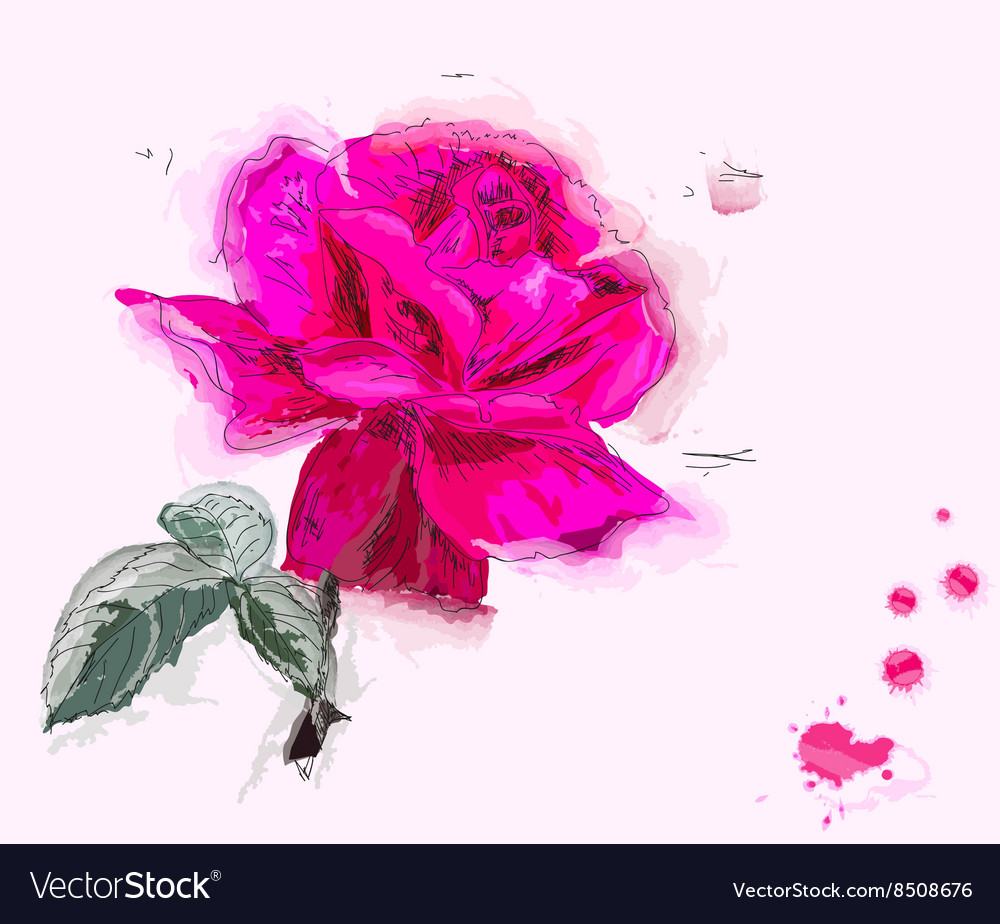 Rose Painting vector image