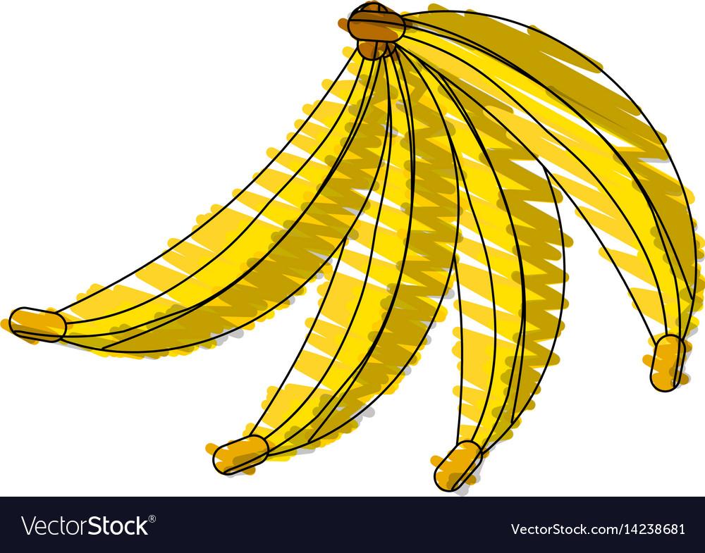 Drawing banana fruit food vector image