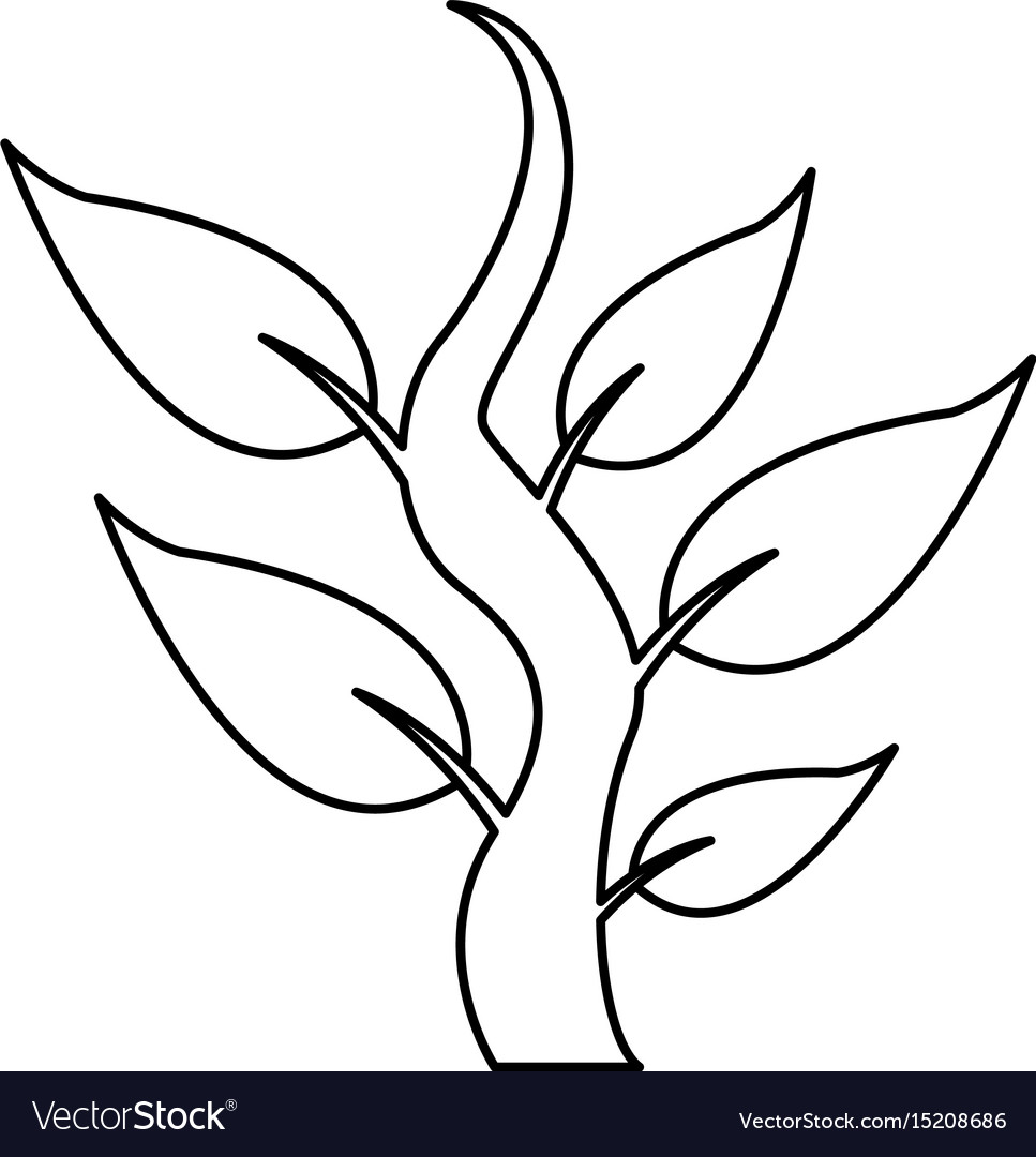 Steam with leaves natural plant botany icon vector image