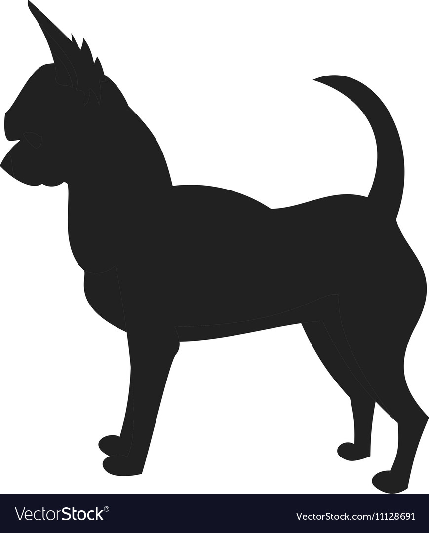 Chihuahua Black Silhouette vector image