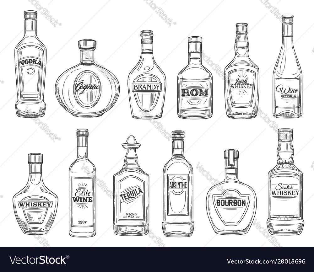 Drinks and alcohol beverages sketch bottles