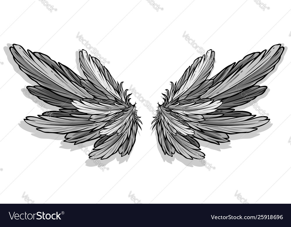 Graphic detailed angel or bird wings