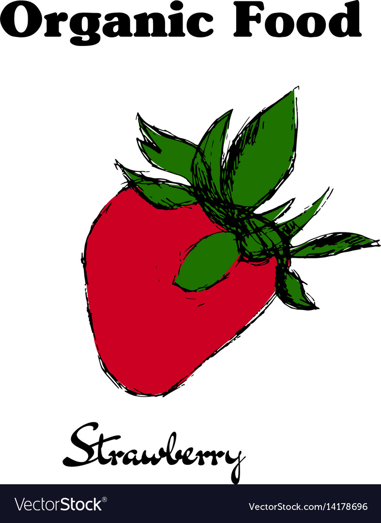 Hand drawn vintage strawberry