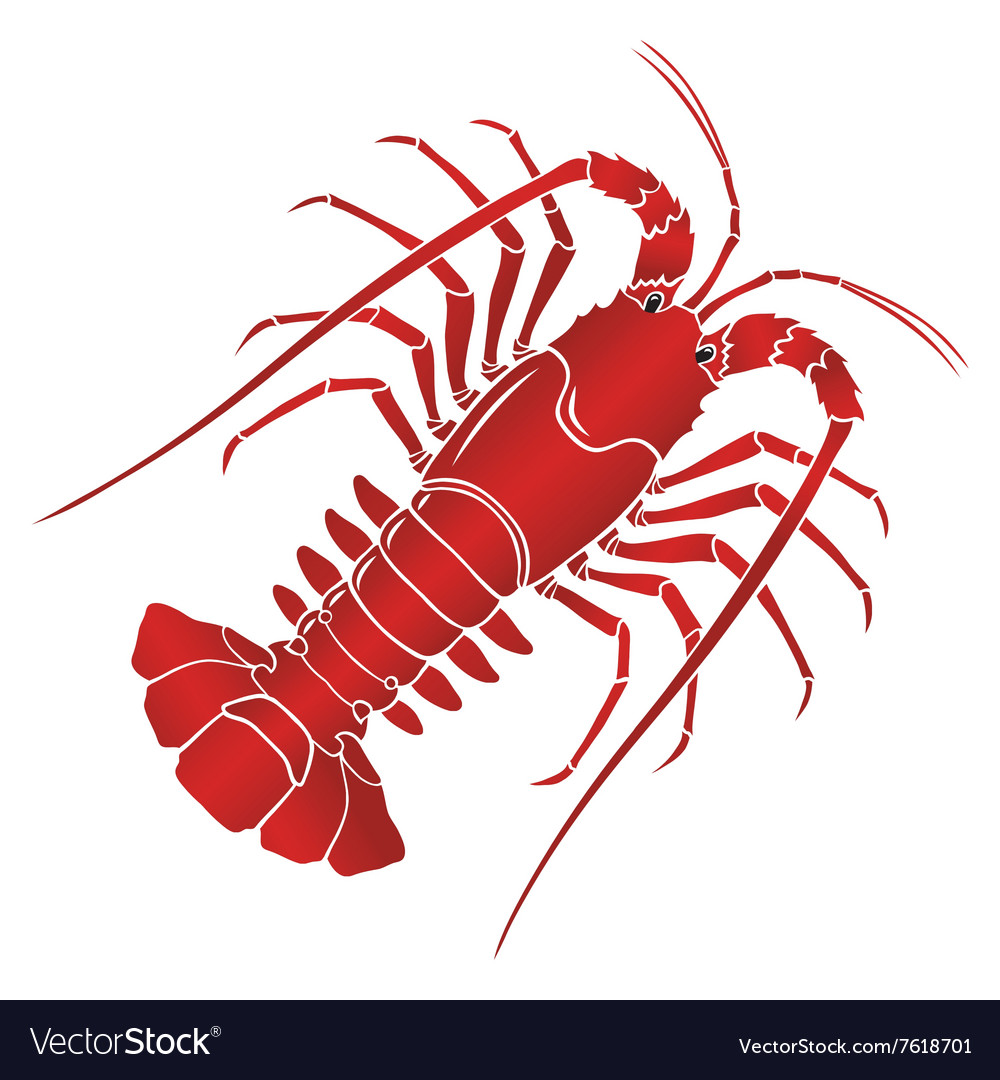 Boiled spiny or rock lobster