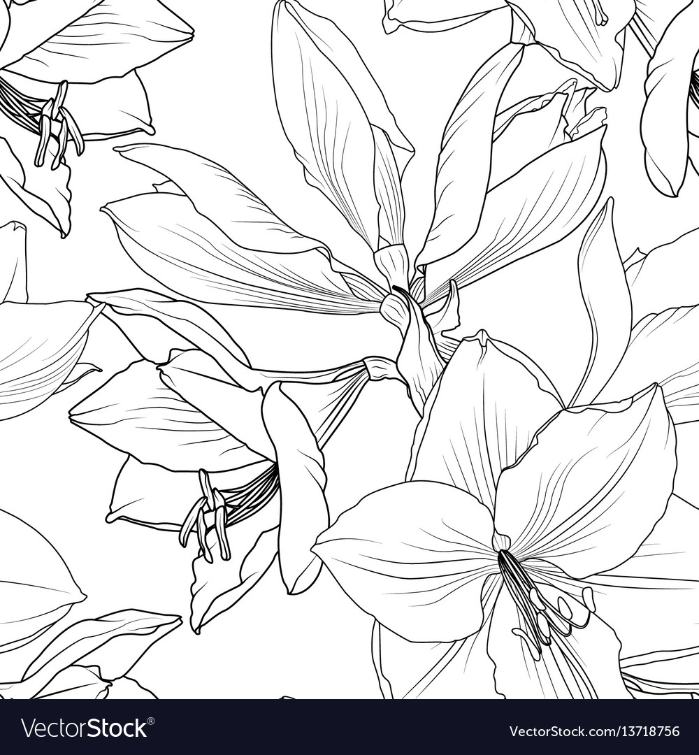 Lilly flowers closeup seamless pattern hippeastrum vector image