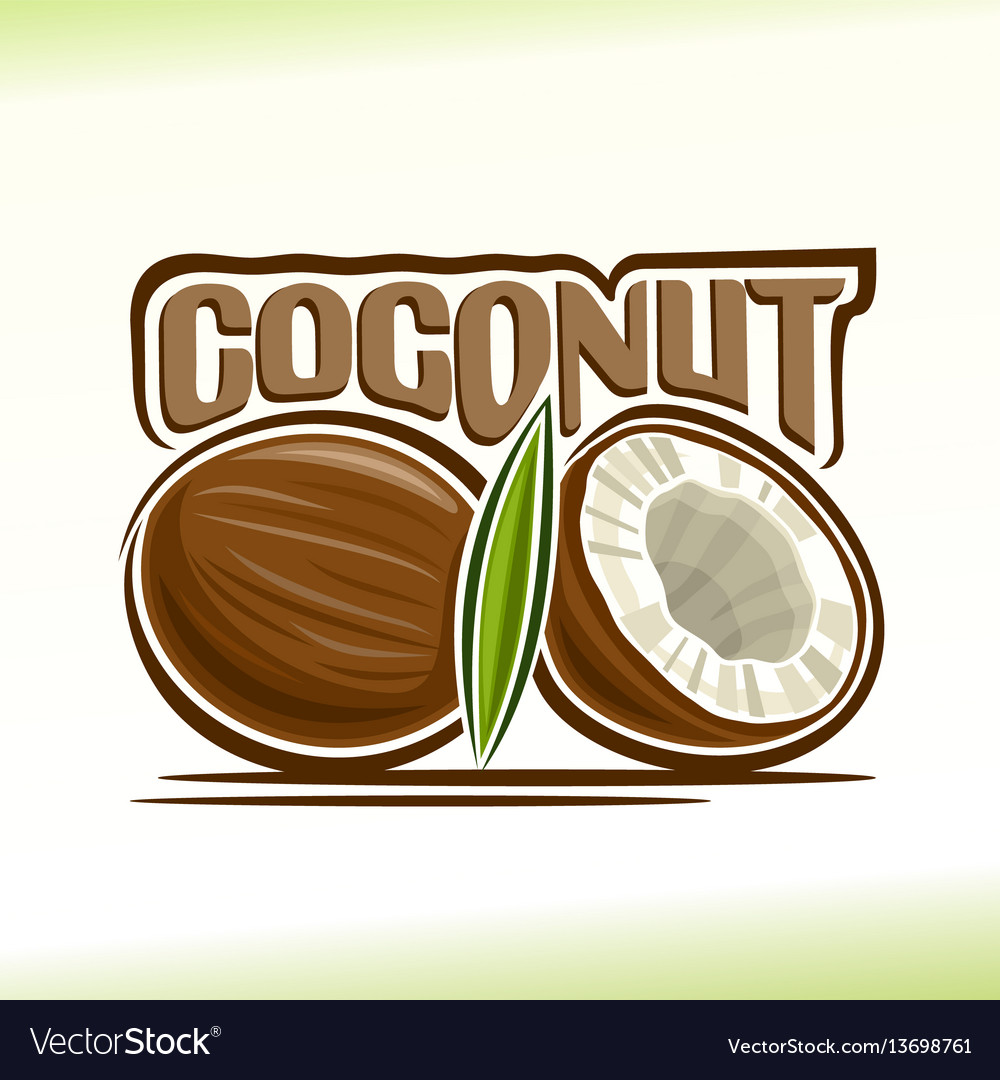 Coconut still life vector image