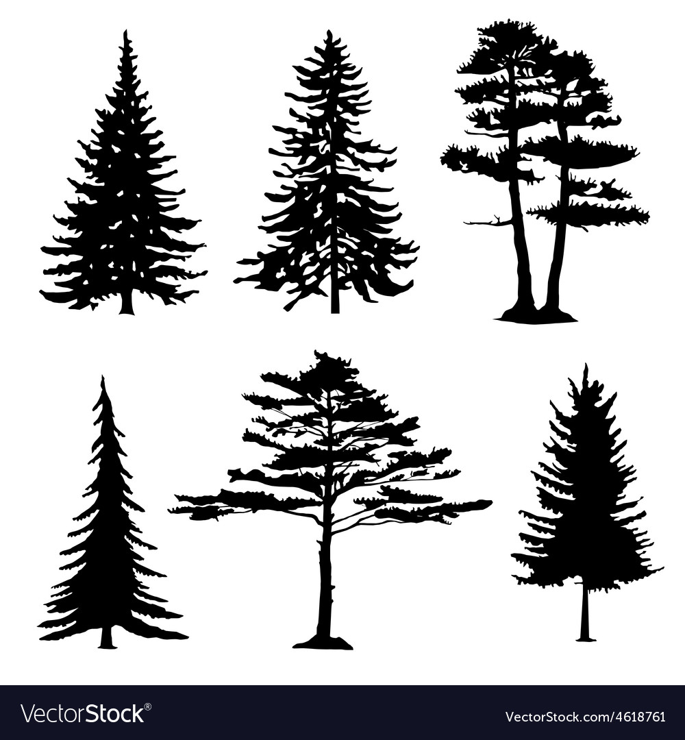 Coniferous trees silhouettes collection