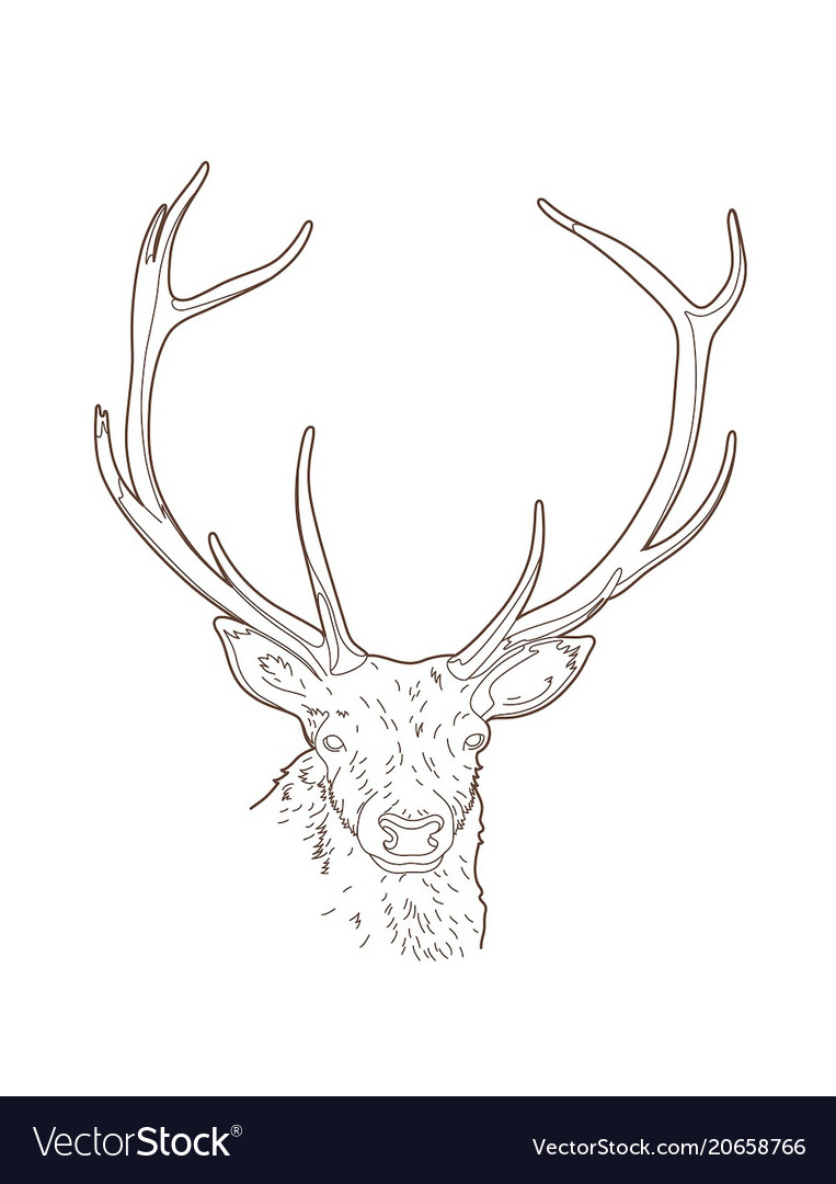 Drawing deer head vector image