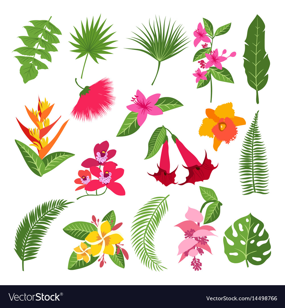 Exotic Tropical Flowers And Leaves Royalty Free Vector Image