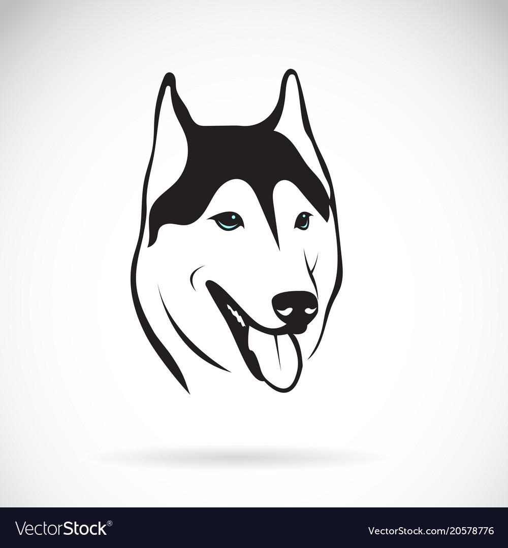 Siberian husky dog head design on white vector image