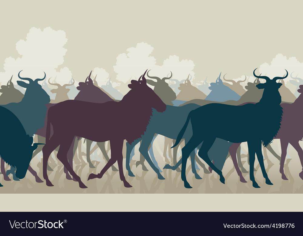 Wilderbeest herd