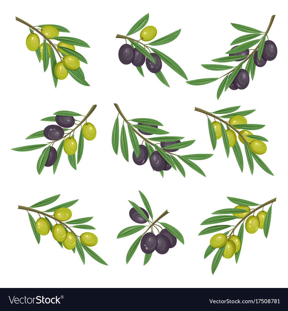 Foliage with dark and light olive branches