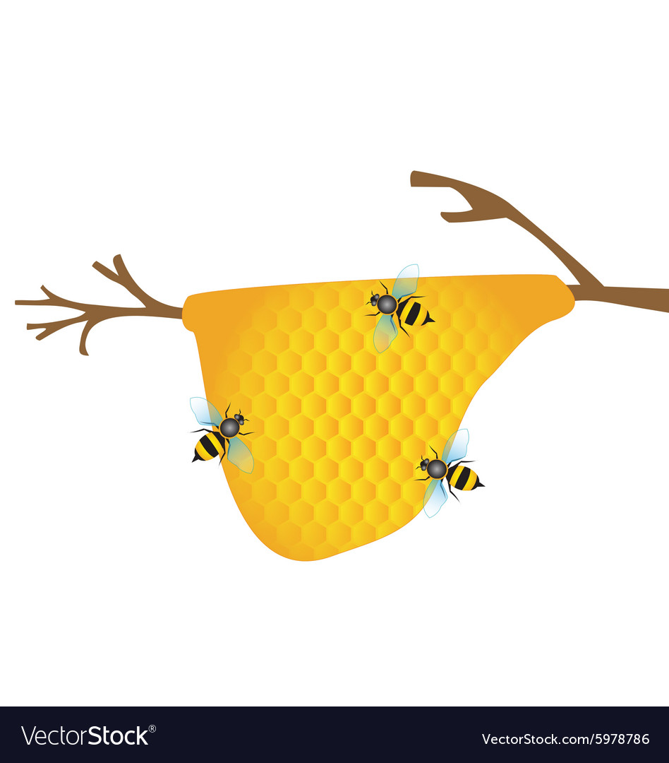 Worker bees on honey cells vector image