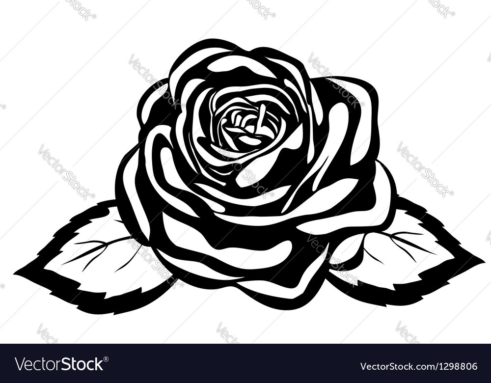 Abstract black and white rose vector image
