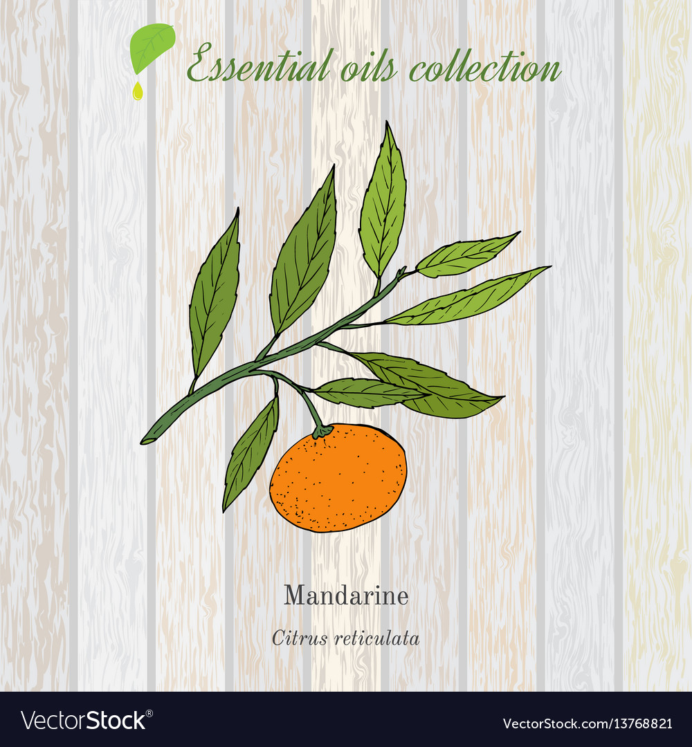 Pure essential oil collection mandarine wooden