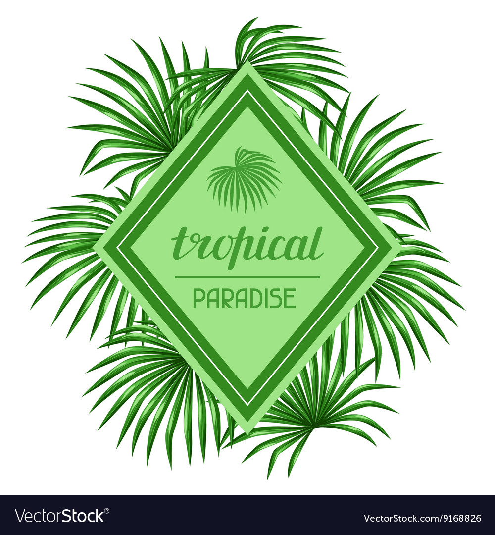 Paradise card with palms leaves Design for vector image