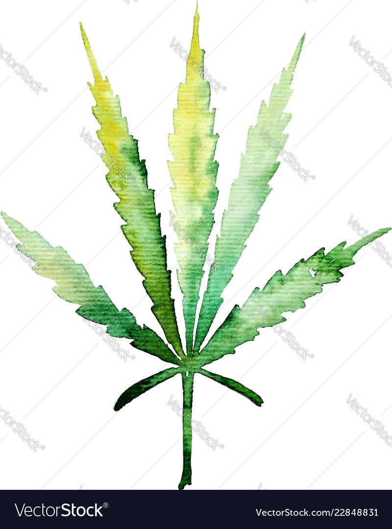 Green cannabis leaf for your design projects