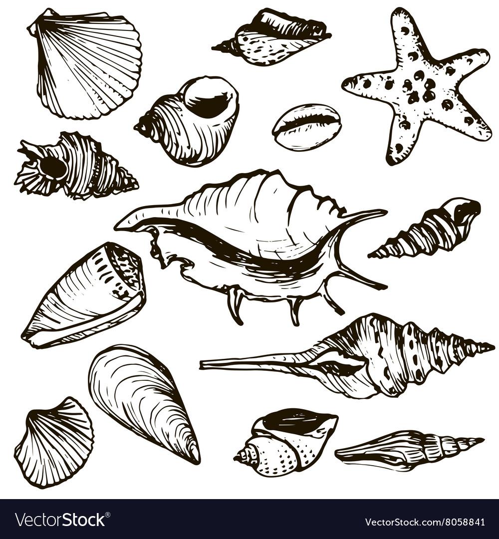 Set of shells vector image