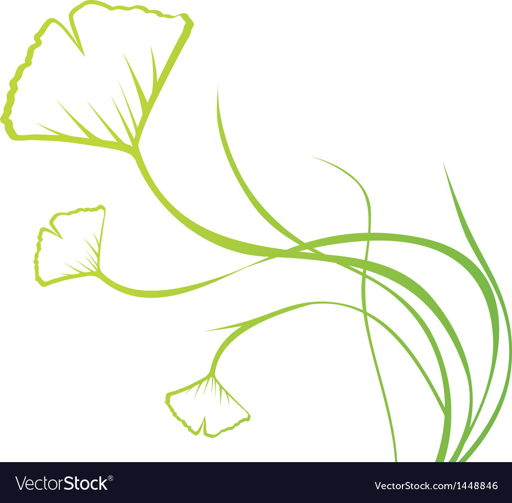 Biloba Plant