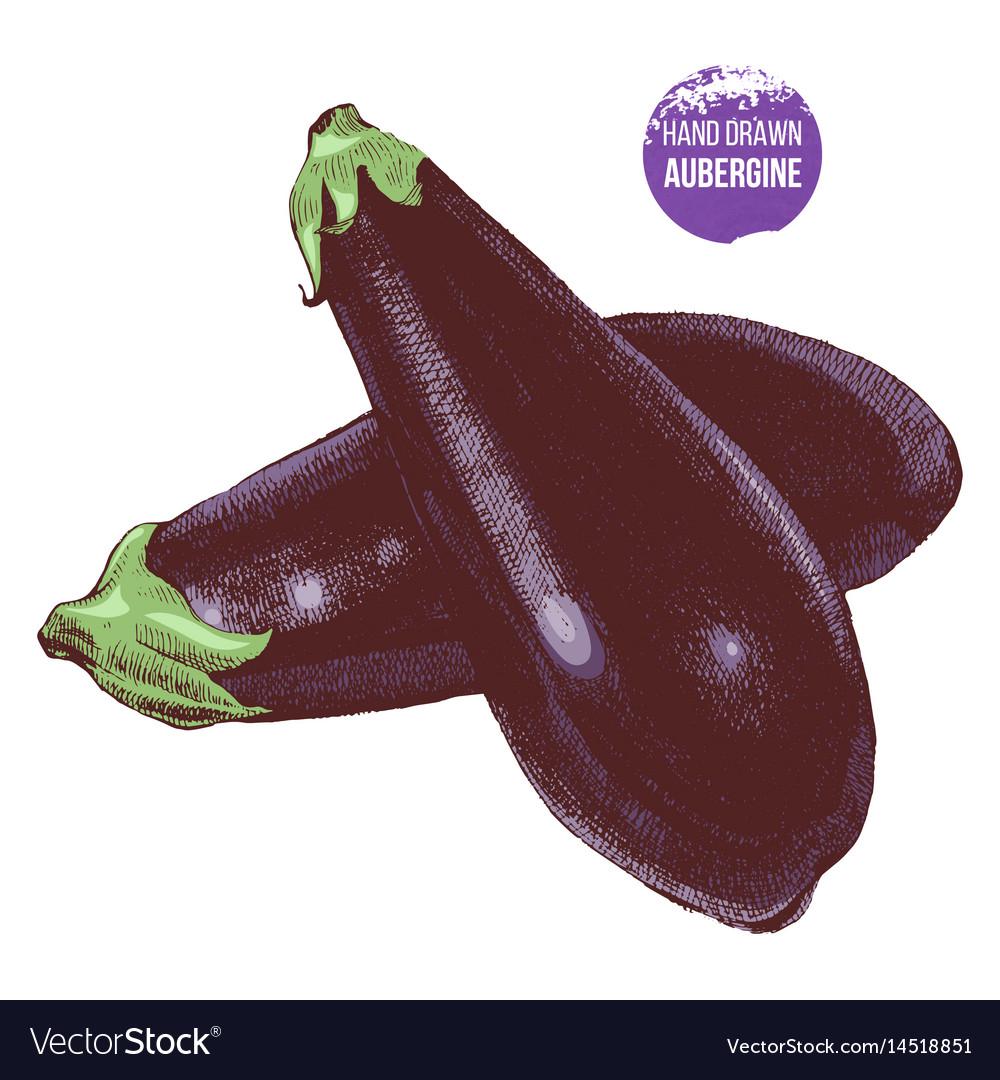 Hand drawn aubergine vector image