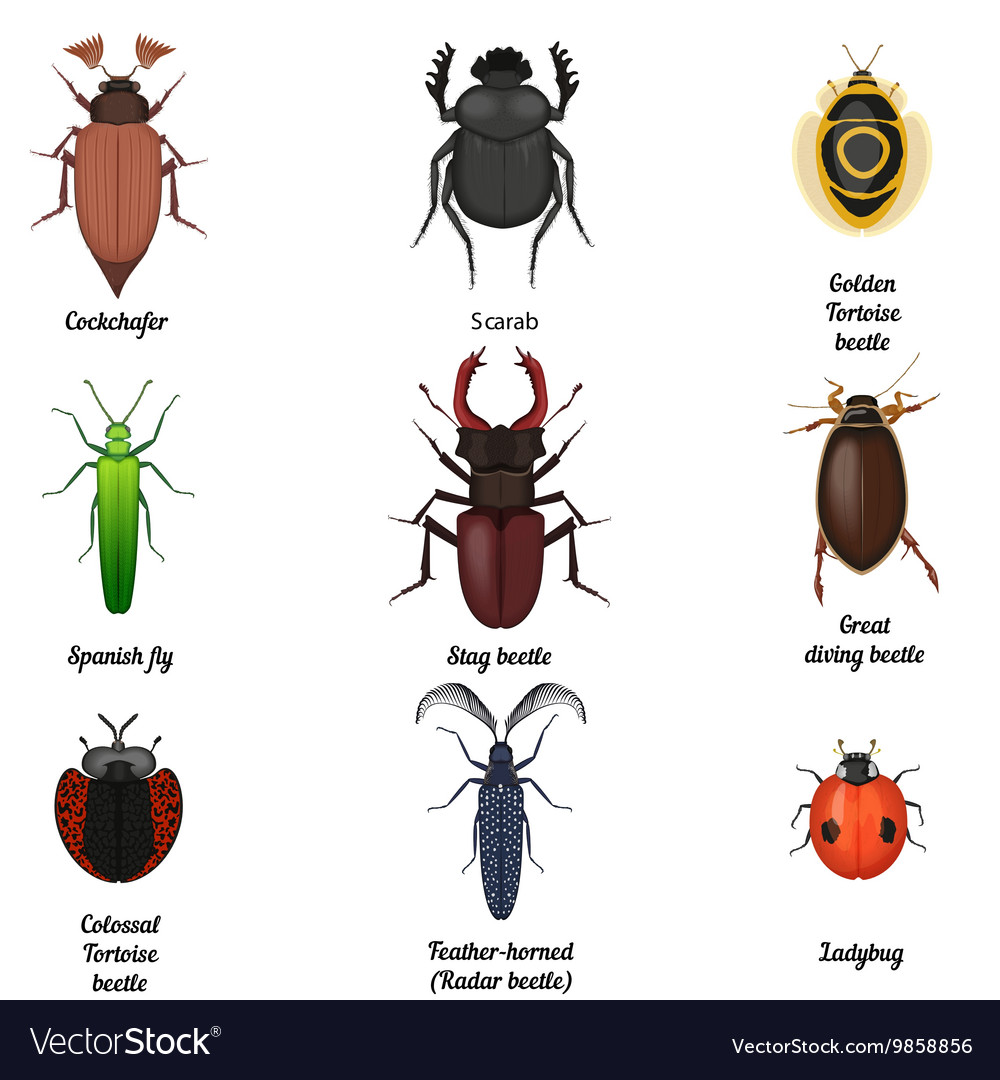Insect icons set Beetle bug icon entomological