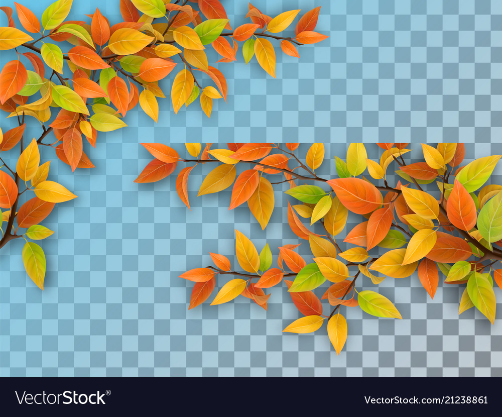 Set of tree branches with autumn leaves