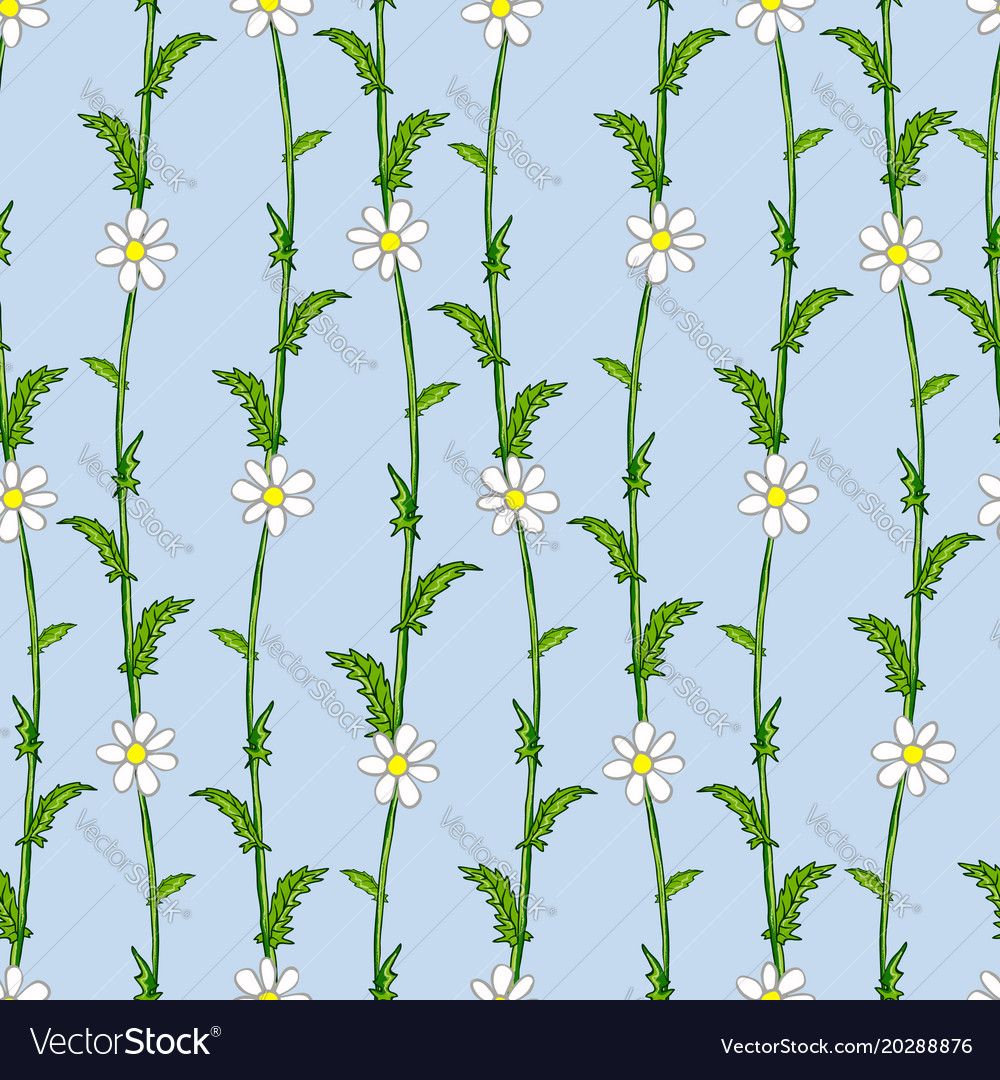 seamless pattern of white daisies on green stems vector image