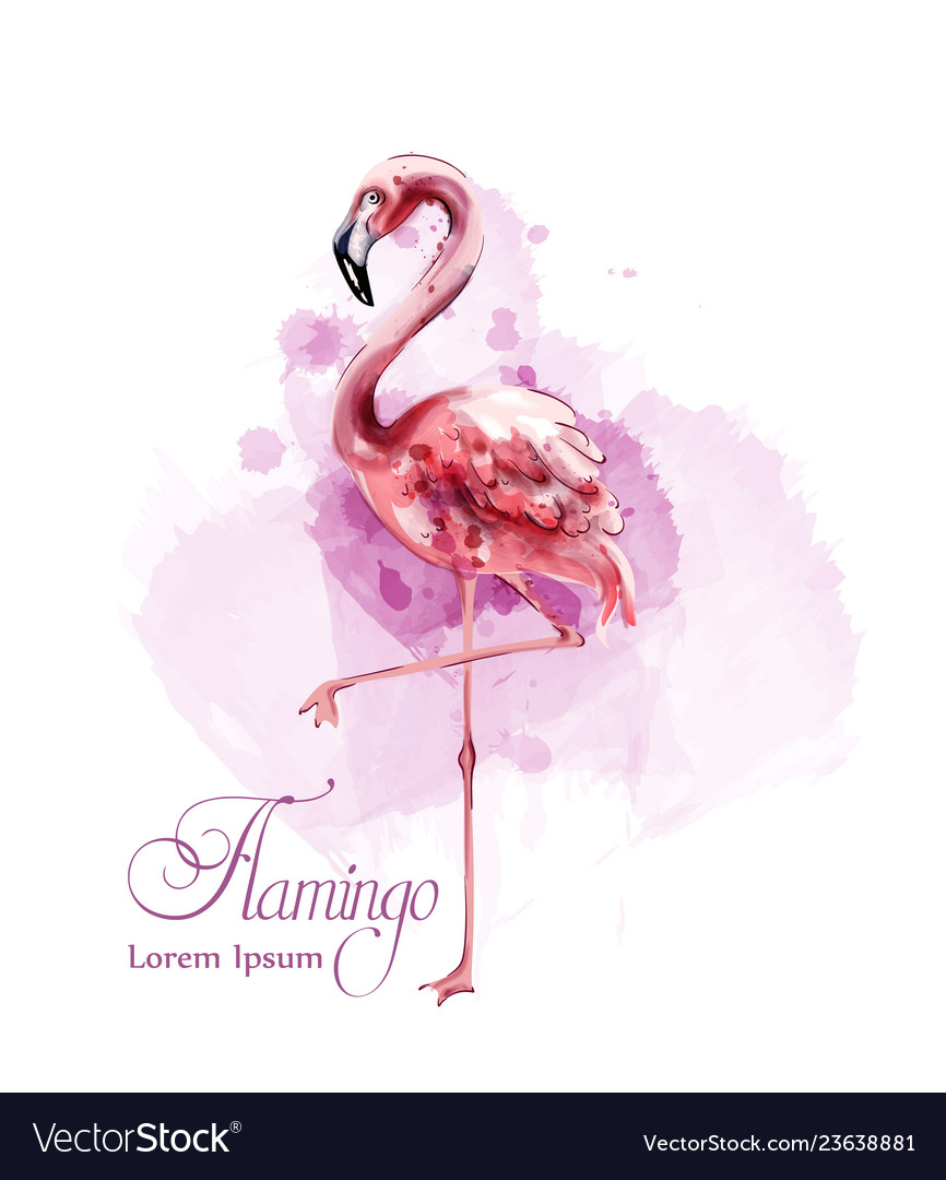 Flamingo in watercolor isolated exotic