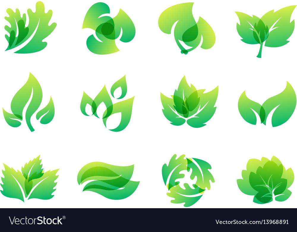Green leaf eco design friendly nature elegance vector image
