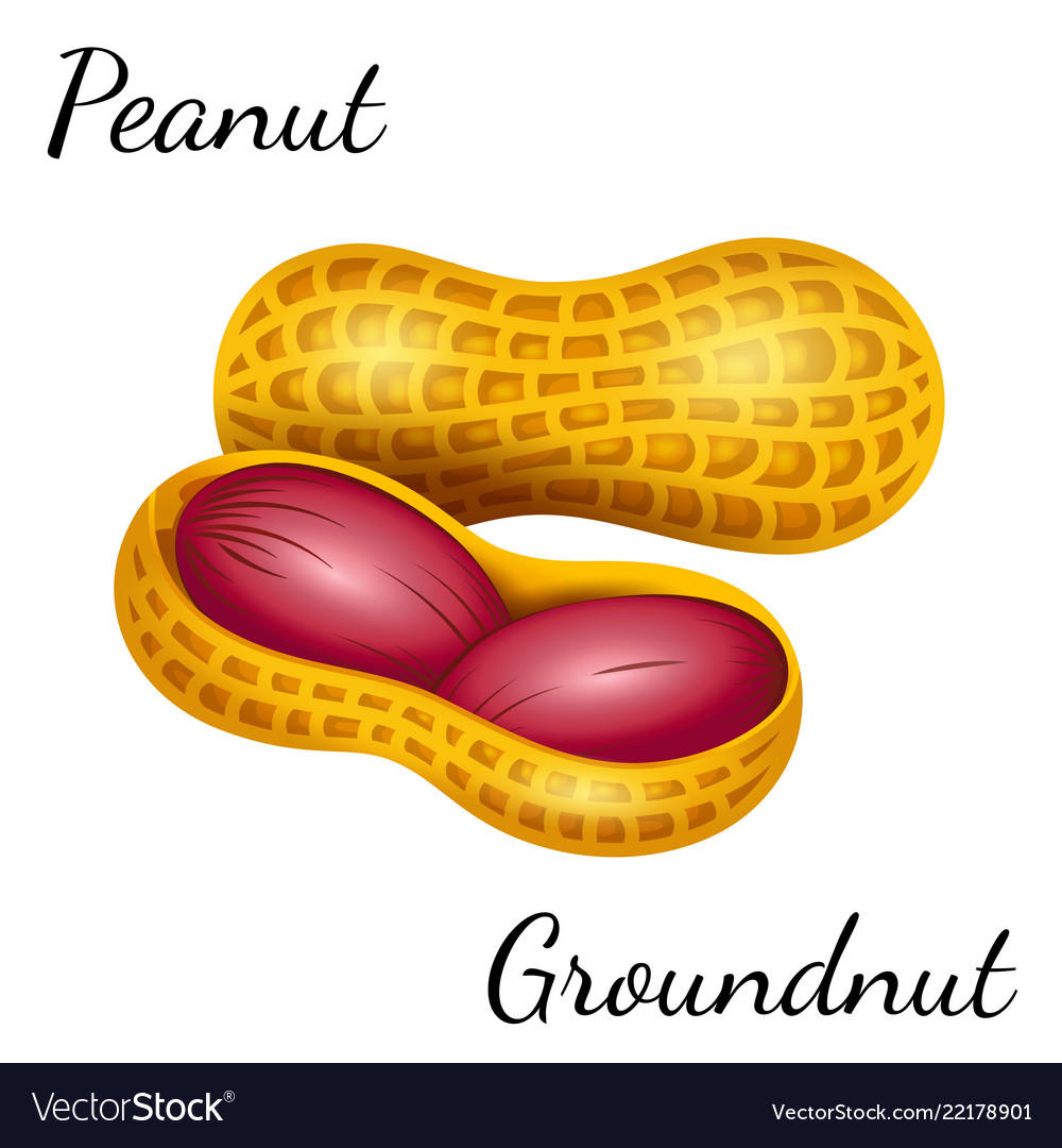 Peanut groundnut in